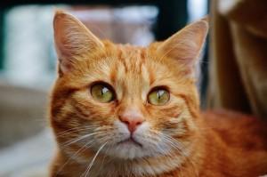 cat-1044768_960_720