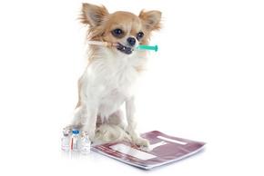 quand-faire-vaccination-chien