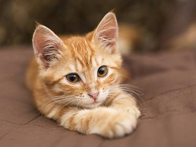 pourquoi-couper-les-griffes-de-mon-chat