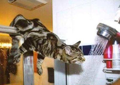 chat_eau