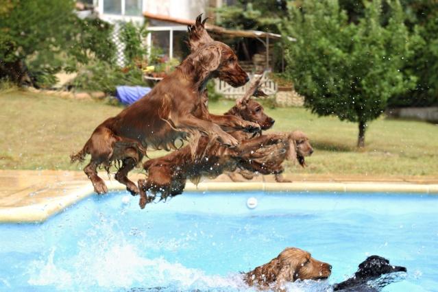 chien-chaleur-canicule-baignade